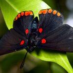 ---black-butterfly-7288