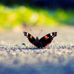 ---black-butterfly-photos-7286