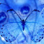 ---blue-butterfly-13789