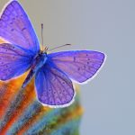 blue-butterfly-2880x1800-macro-hd-3552