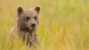 brown-bear-2560x1600-hd-6350