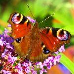 ---butterfly-13904