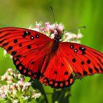 ---butterfly-13905