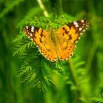 butterfly-2560x1440-4k-6150