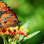 ---butterfly-2830