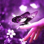 ---butterfly-7524