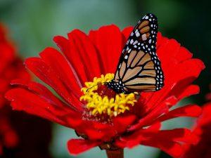 ---butterfly-7525