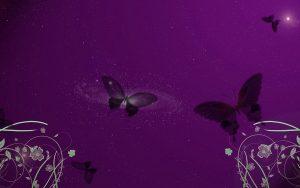 ---butterfly-heart-vector-13902