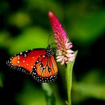---butterfly-on-flower--7521