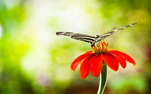 ---butterfly-on-red-flower-7522