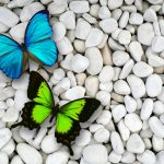---butterfly-wallpapers-831