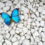 ---butterfly-wallpapers-835