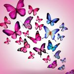 ---butterfly-wallpapers-838