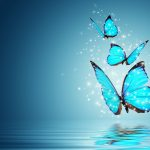 ---butterfly-wallpapers-842