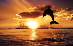 ---dolphin-in-sunset-8402