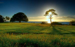---dreamy-sunset-8452