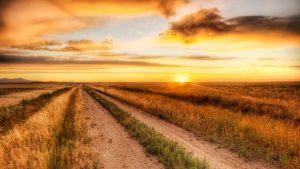 ---field-sunset-wallpaper-8748