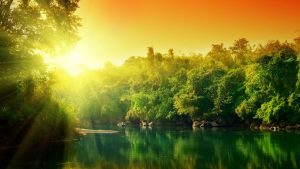 ---forest-river-sunset-8898