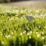 ---grass-sunrise-butterfly-9411