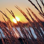---lakeside-sunset-grass-4441