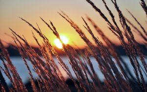 ---lakeside-sunset-grass-4441