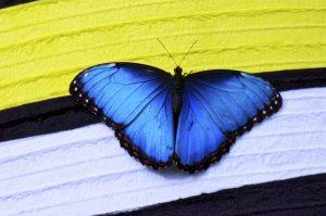 ---papillon-butterfly-16151