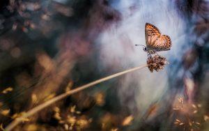 ---plant-butterfly-macro-bokeh-11271