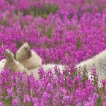 ---polar-bear-5247