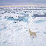 ---polar-bear-5248