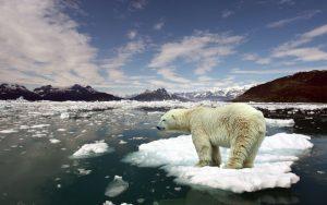 ---polar-bear-ice-5246