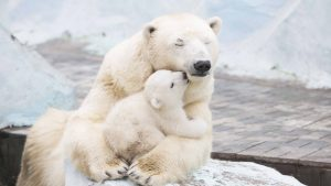 polar-bears-1920x1200-cub-4k-3837