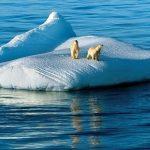 ---polar-bears-on-ice-1351