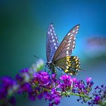 ---pretty-butterfly-wallpapers-16275
