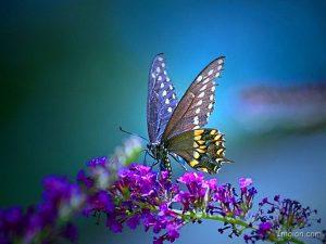 ---pretty-butterfly-wallpapers-16275