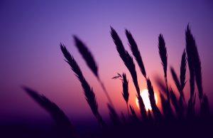 ---purple-sunset-5305