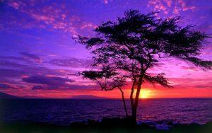---purple-sunsets-16332