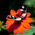 ---red-flower-butterfly-11542