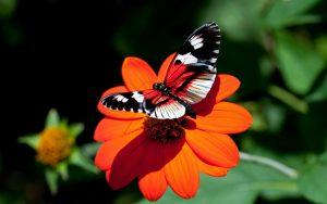 ---red-flower-butterfly-11542