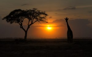 ---sunset-silhouette-wallpaper-12307