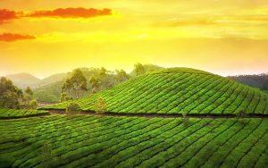 ---teagarden-sunset-12399