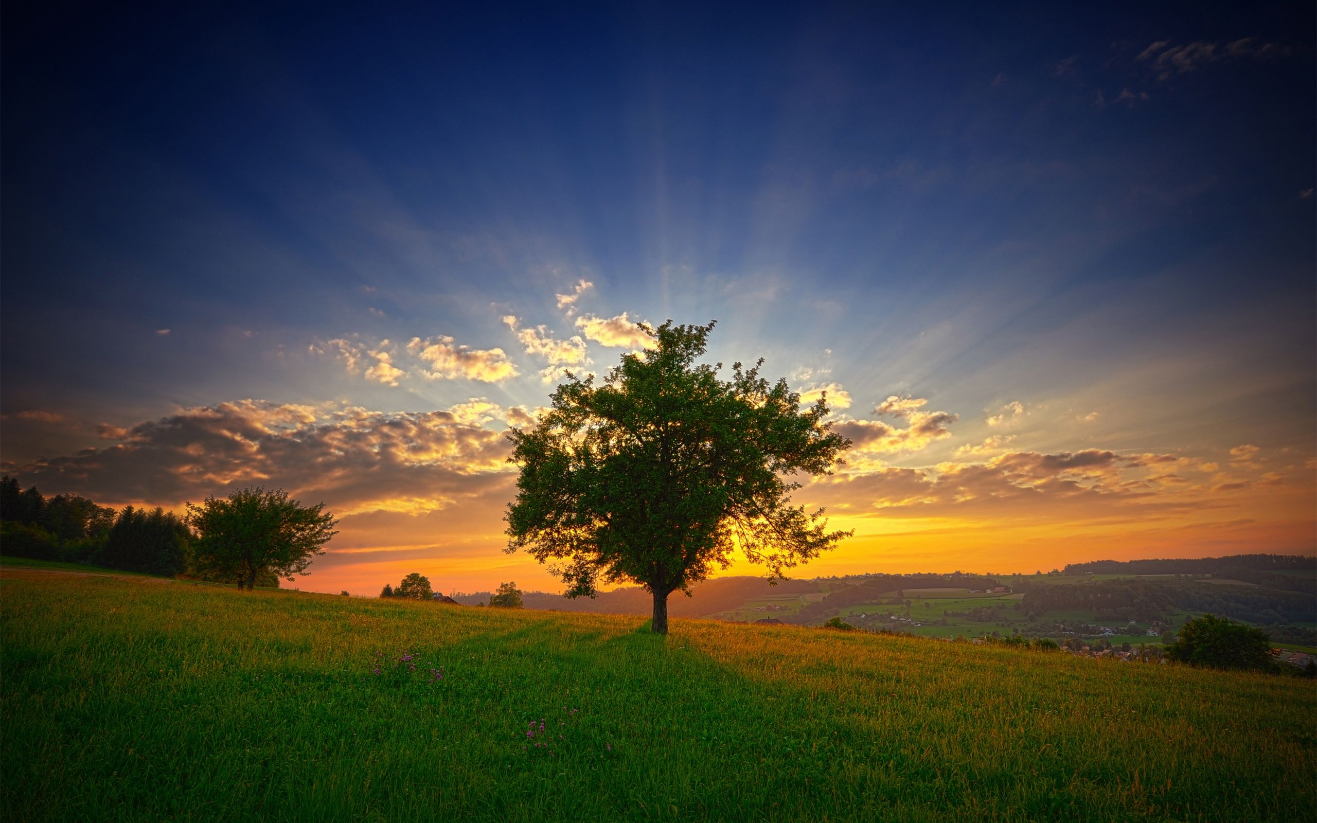 the tree and the sunset wallpaper 16948 wall paper