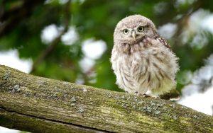---bird-close-up-owl-7252