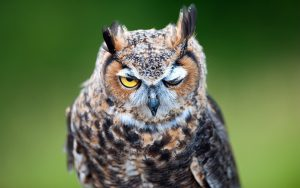 ---bird-look-owl-7254