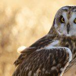 ---bird-owl-7261
