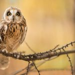---bird-owl-branch-7258