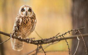 ---bird-owl-branch-7258