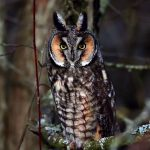 ---bird-owl-look-branch-7259