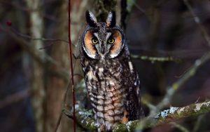---bird-owl-look-branch-7259