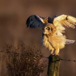 ---bird-owl-nature-photo-7260