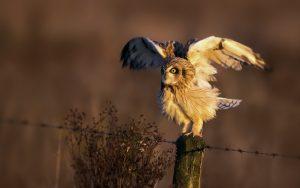 ---bird-owl-nature-photo-7260